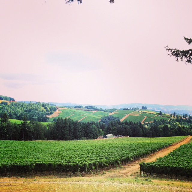 Looking out over Knudsen Vineyards from the cabin deck