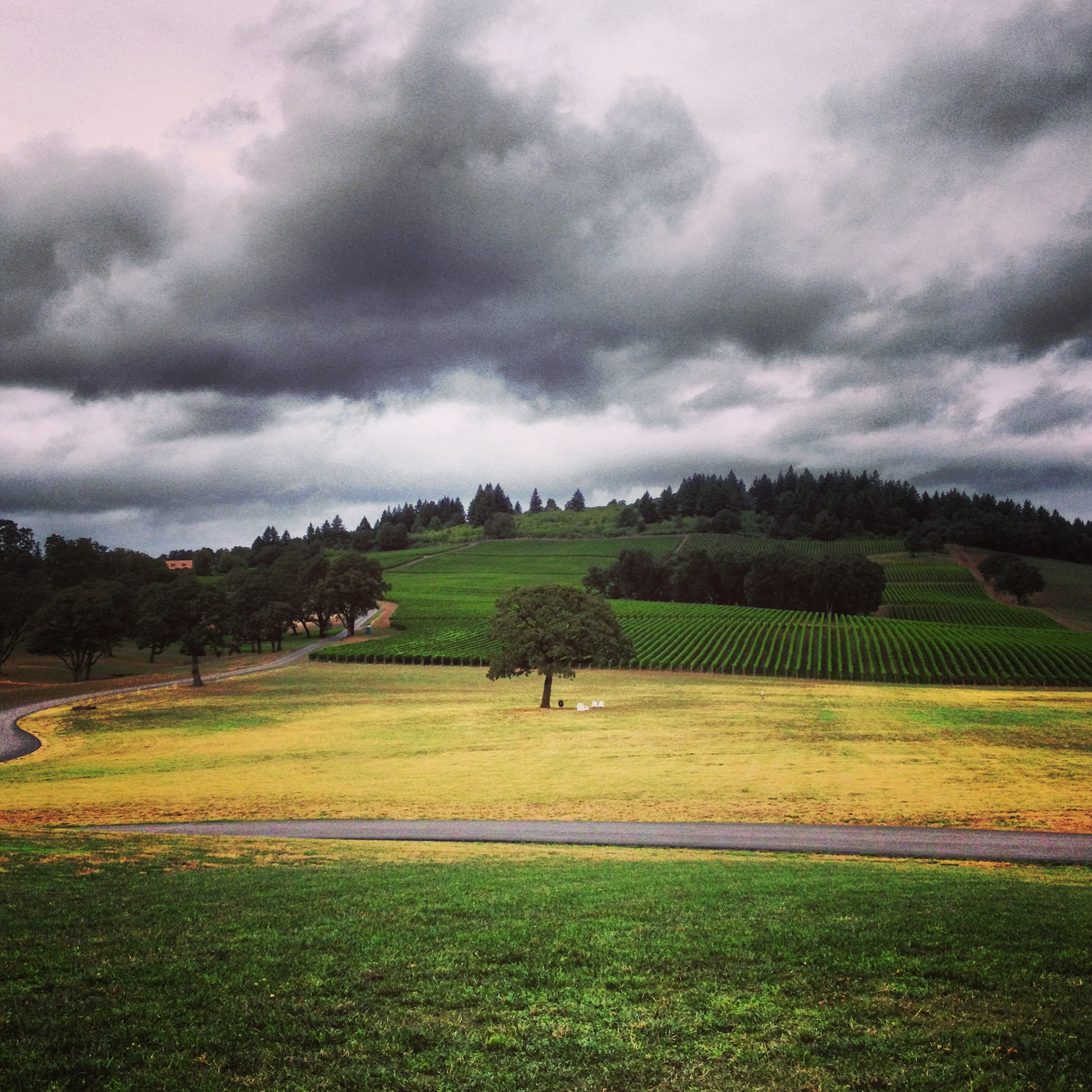 Stoller Family Estate vineyard view from tasting room